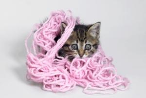 Como los gatos son jugetones puedes premiarlos con juguetes o jugando con ellos.