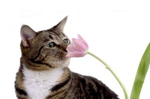 ¿Qué plantas son tócicas para nuestra mascota?